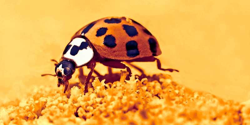Символ гадания - насекомое на цветке