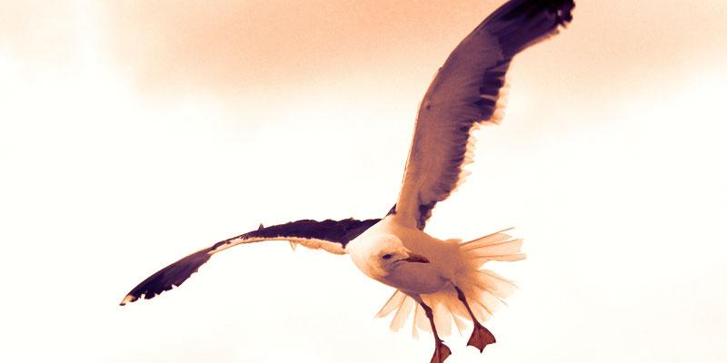 Птица в небе символ для гадания на кофейной гуще