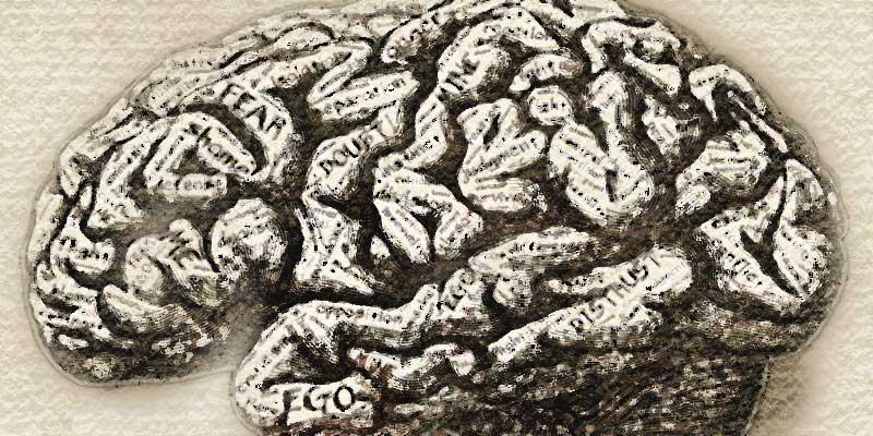Мозг человека с точки зрения психолога
